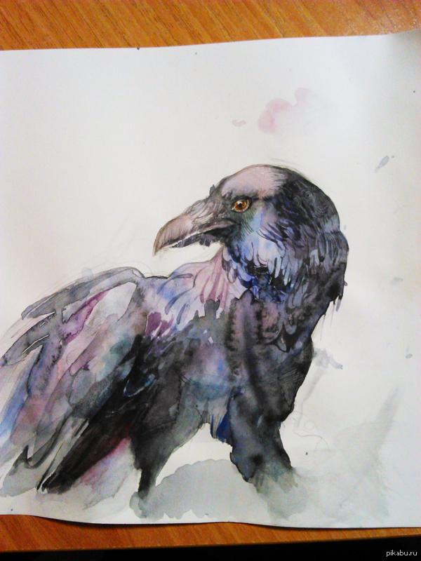 Ворон акварелью