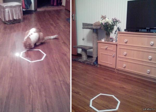 Моего кота не впечатлило... Сделал пару кругов и ушел на свое место (на фото справа)