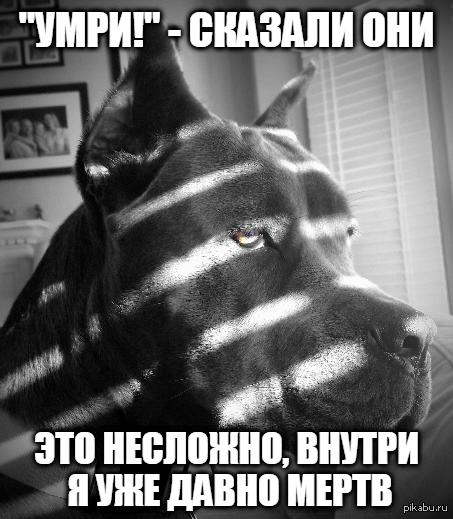 У этого парня чёрная дыра в сердце.. Dog Noir (сгагжено)