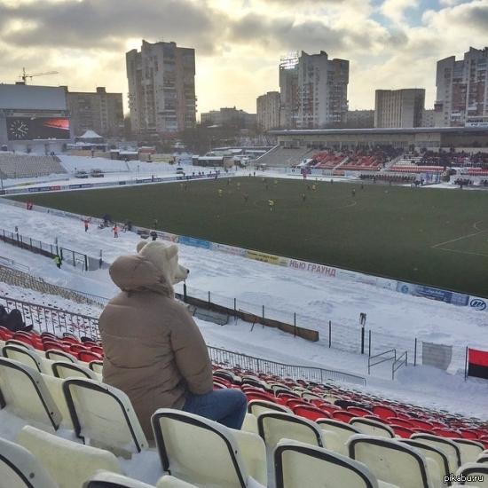 Meanwhile in Russia Ничего особенного, просто медведь смотрит матч Амкара в Перми.