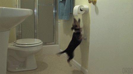 Настойчивость Самое время звать кота