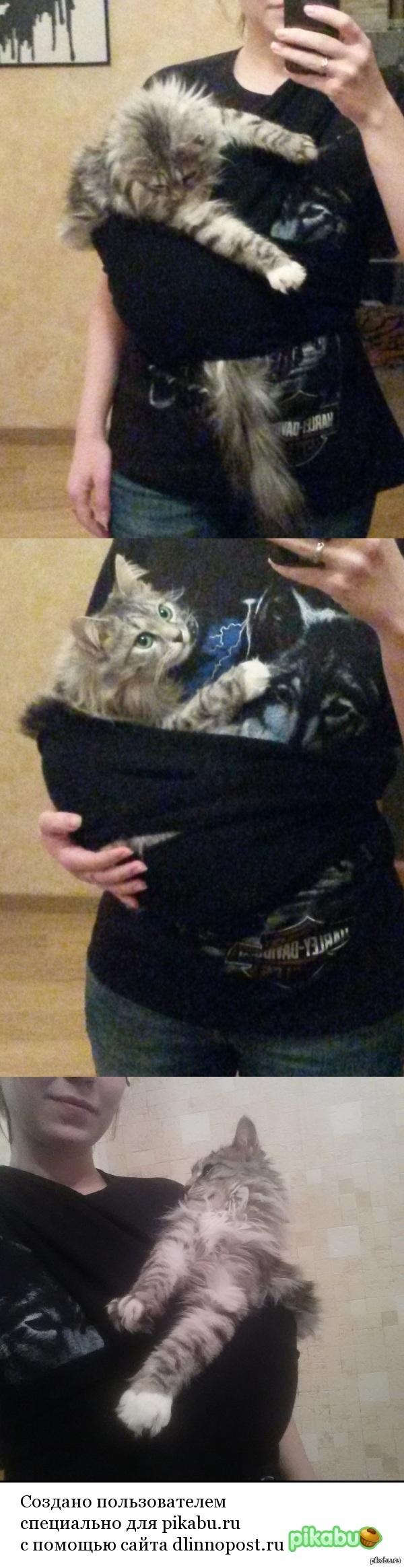 Кошка предпочитает сидеть на руках и вообще быть всегда рядом))