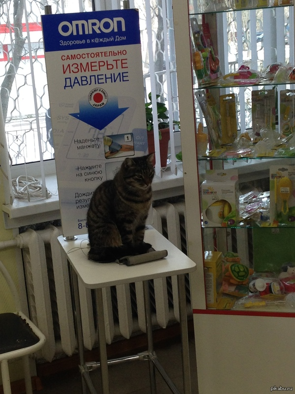 Новая Услуга в Аптеке В местной аптеке доступна новая услуга: Замерить давление коту без SMS и регистрации