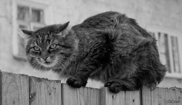 холода не радуют котиков