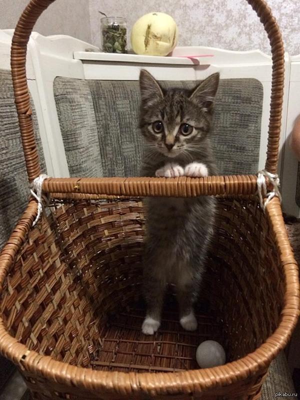 Простите-извините, а у вас сосисочек не найдётся?))) очередной котёнок