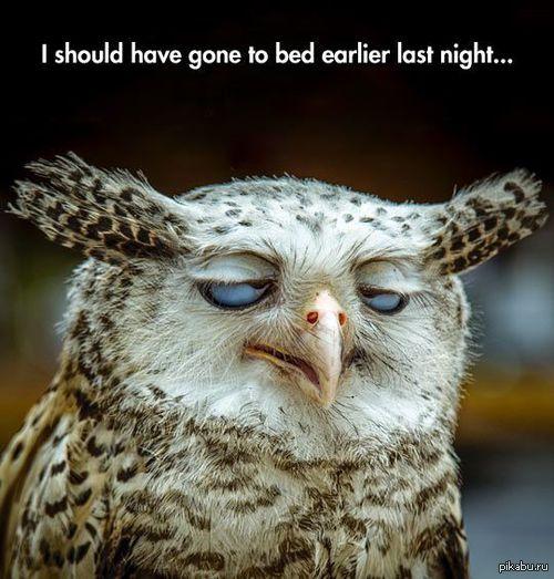 И так каждый день. *Я должен был раньше лечь в кровать прошлой ночью*