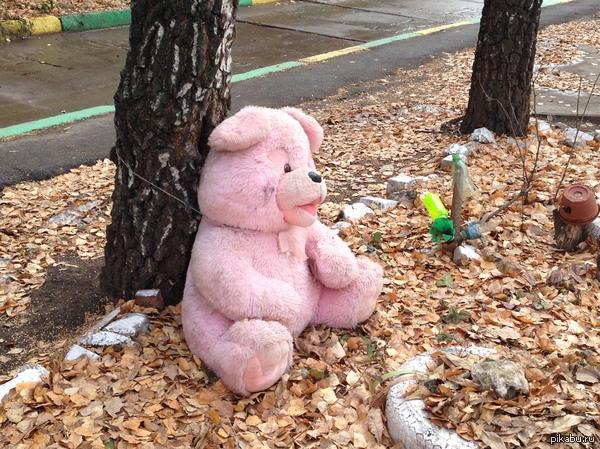 Наказан Отряд «добрых» бабуль приручает дворовых медведей