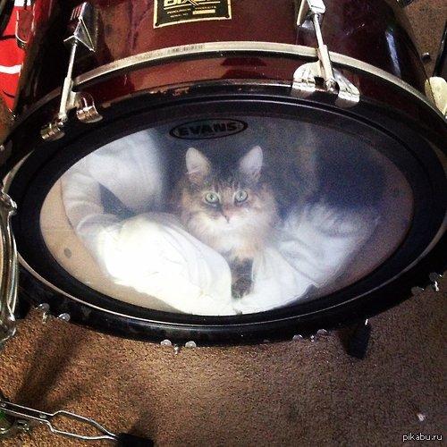 Kickcat Даже не барабанщики и не музыканты, думаю, поймут) Здесь ведь любят котиков)