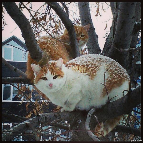 Вот таких вот милых котиков встретил на улице.