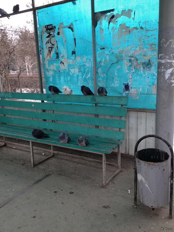 Птицы мира. Сегодня в 11 утра произошла оккупация скамейки.