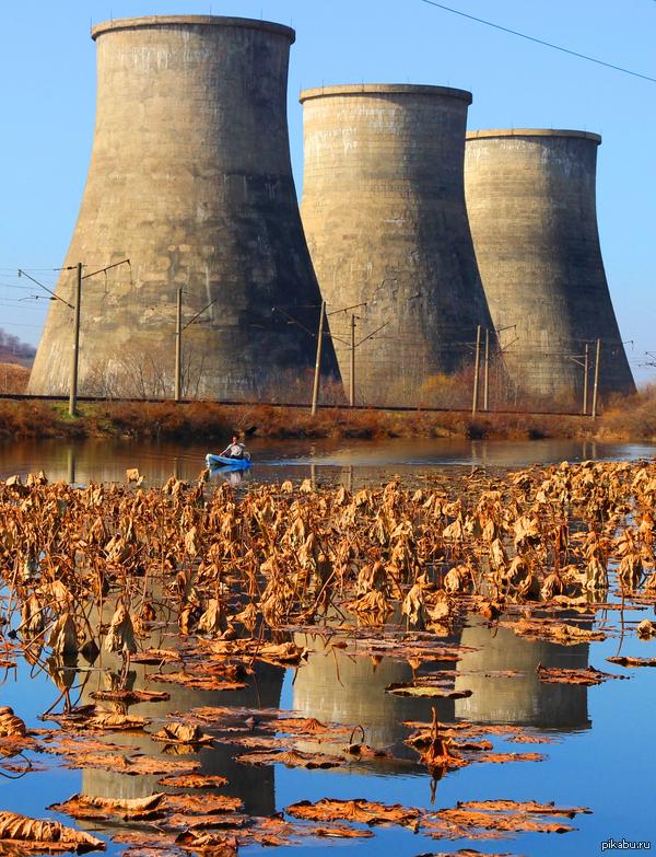 Осень в Приморье Градирни Артемовской ТЭЦ стоят у пруда с краснокнижными лотосами.