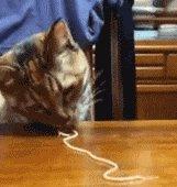 cat peeing in random places