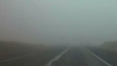 Неожиданно из тумана