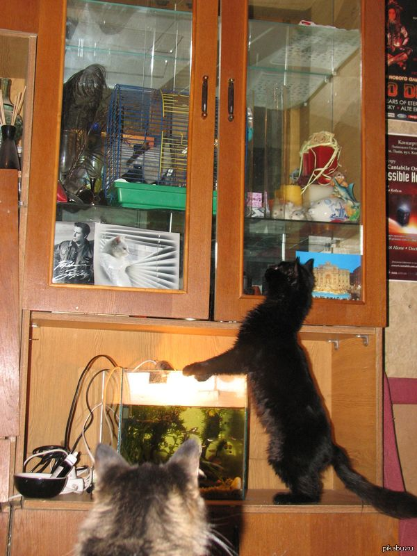 """У котов новое развлечение - смотреть на снегирей и облизываться ) пока коты не перестанут на них реагировать, клетку из шкафа не достану ) а пока шоу """"За стеклом"""")"""