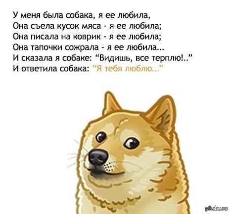 собака любила стих текст