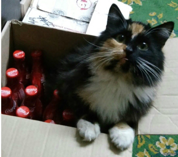Моя котейка В ожидании праздника))