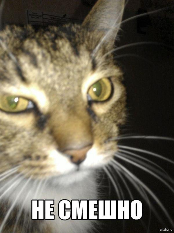 Кот недоволен Когда я пытаюсь пошутить на Пикабу