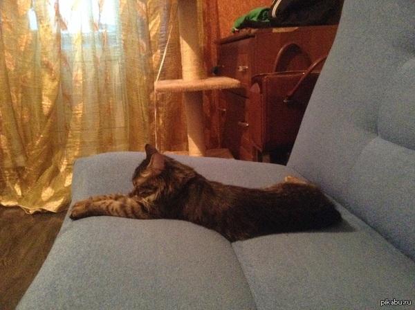 По старой трдиции - мой кот. Может кто подскажет что это за порода? Когда брали котенка, сказали что папа-мейнкун, а мама - сибирячка. Вроде не похож ни на того, ни на другово.
