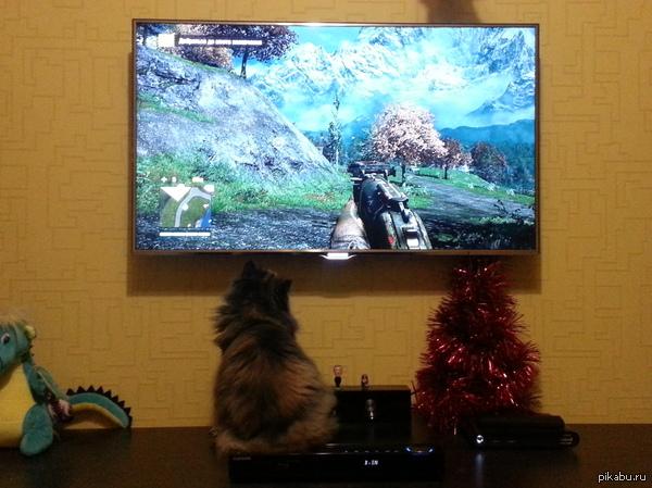 Любительница Far Cry 4 Моя кошка очень любит вот так сидеть и смотреть как я играю в Far Cry 4