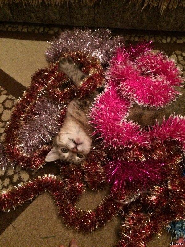 Збс шуршать) Вот кто действительно рад новому году)