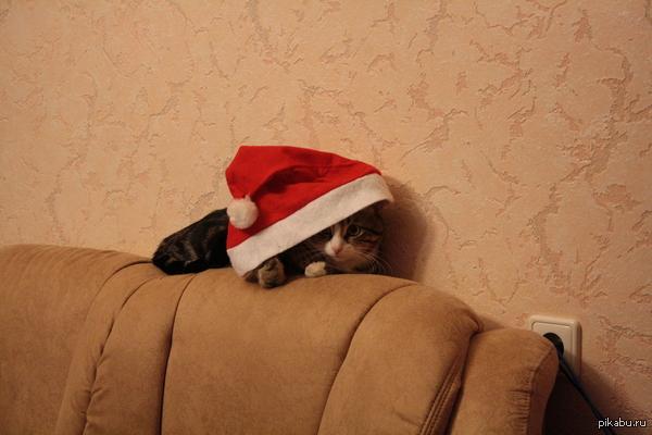 """Уставший кот кот, который устал отмечать Новый год или """"Да когда вы уже ляжете спать?!"""""""