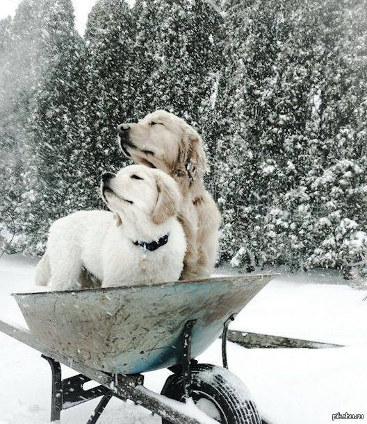 Запах зимы.