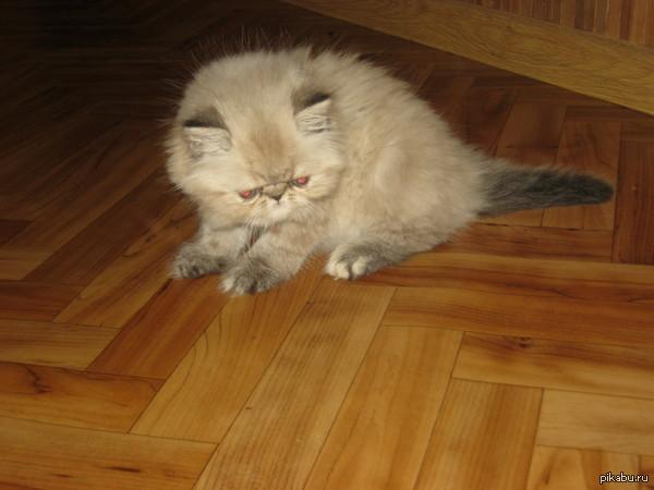 Мама позвонила,и сказала,что мы взяли котенка.Но в коридоре меня встретил дьявол...