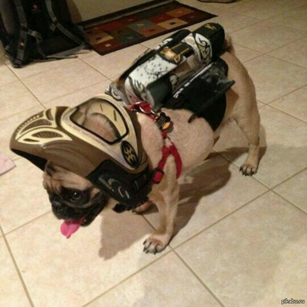 Просто собака пейнтболиста Приносит не тапки, а тубу с шарами! :)