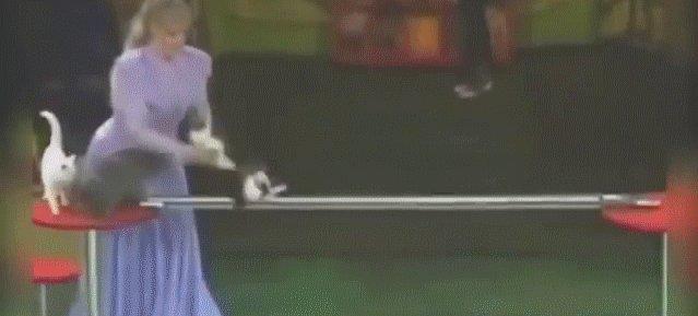 Тренированные котэ