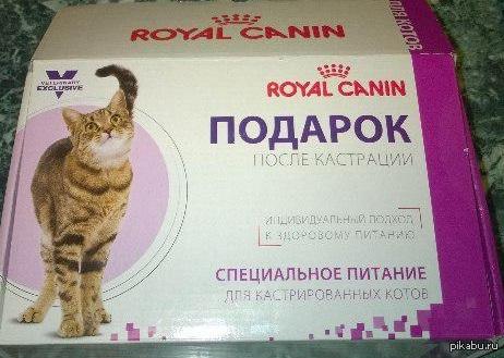 Подарок после кастрации Они реально там думают, что отрезав коту яйца его можно  задобрить кормом?)