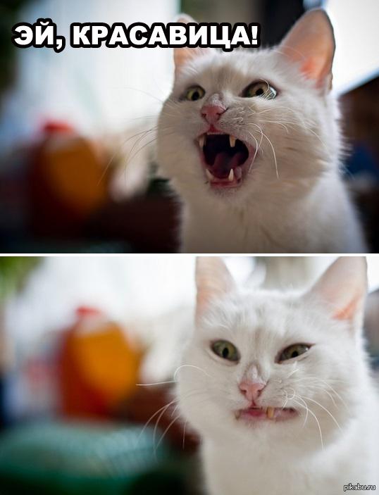 Отпусти мем кот