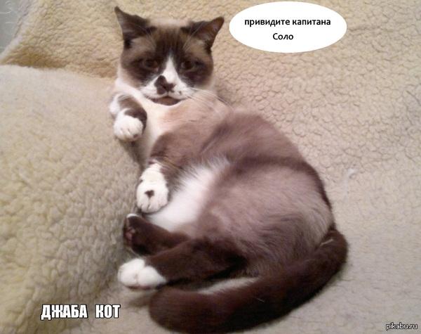 Кот охренел