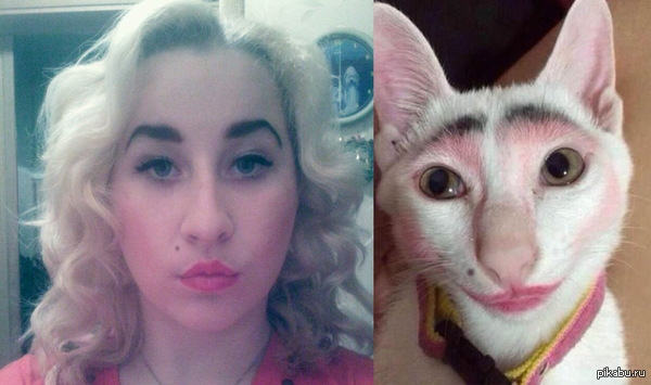 термобелье кошка похожа на свою хозяйку является