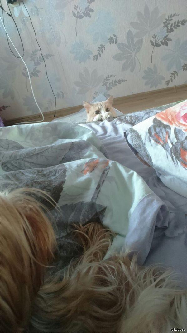 Новый член семьи Позавчера завели йорика. Вот с такими глазами его вчера утром обнаружил 12-летний кот