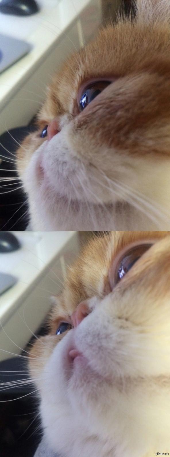 Если у вас нет радостного настроения в этот день просто посмотрите на котика