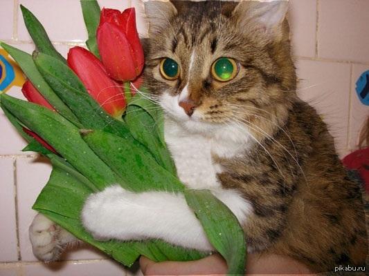 Коты и цветы картинки