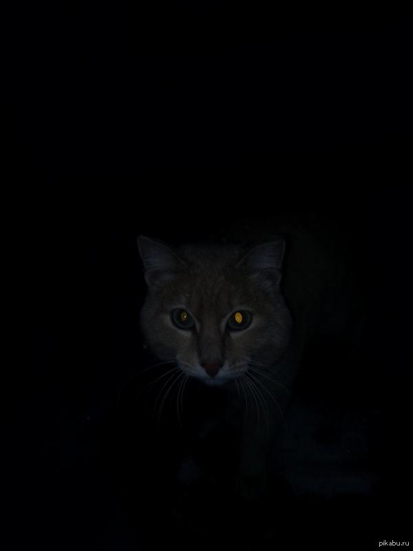 Alone in the dark Снимал на вискас.