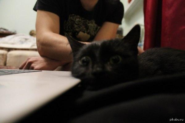 Думает о том, что её ждёт.. первая моя кошка, не обижайте)