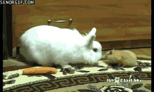 тихо сп*здил и ушел, называется нашел слишком добрый заяц