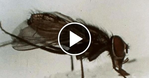 Сонная муха гифка может
