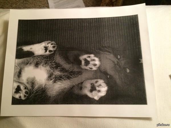 """Кто отксерокопировал кота? """"Похоже, кто-то отксерокопировал кота в библиотеке, сотрудник библиотеки наткнулся на это фото во время учебы."""""""
