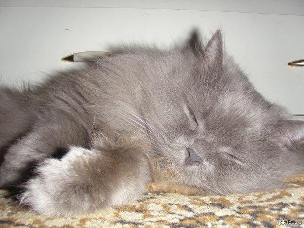 Когда то у меня тоже был кот но его украли