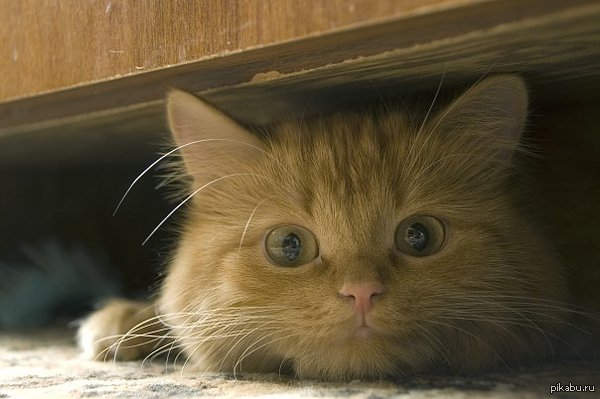 Кошка Моя Алиска