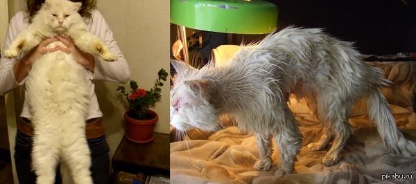 """Пора и мне показать нашего """"Дудуся"""" Вернулся спустя трехнедельного загула, решили помыть.  Плохая была идея."""