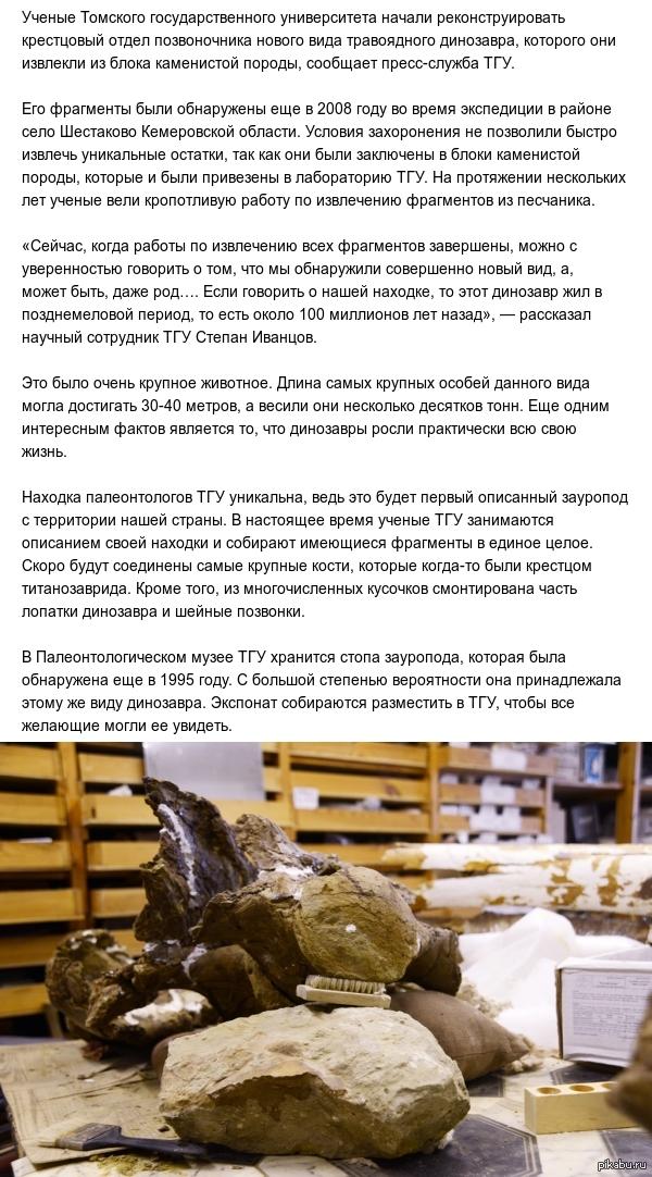 Новый вид динозавра-зауропода открыли в Сибири http://info.sibnet.ru/?id=417004#nc