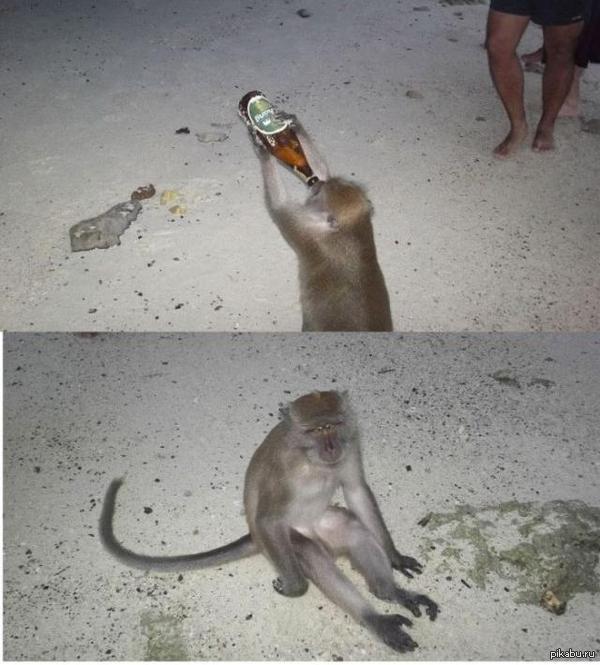Обидно... Когда купил дорогое, импортное пиво, отпил, а оно оказалось безалкогольным...(