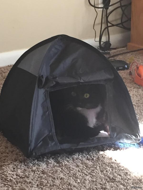 Кошке пришелся по душе её новый домик