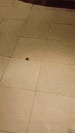 Убил паучка