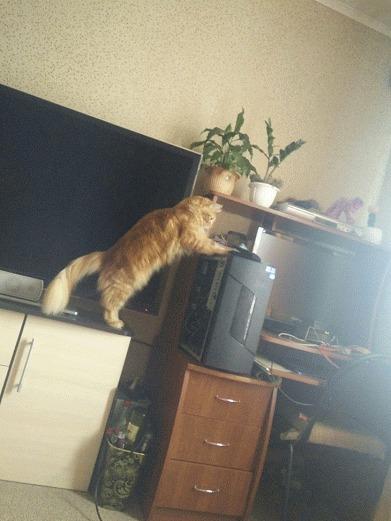 КотоКач Мой котейка