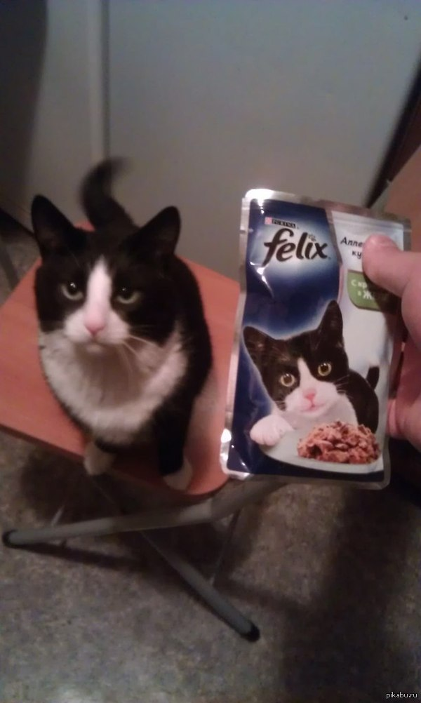 Паршиво,когда твой кот добился большего чем ты...XD Мой котей :)